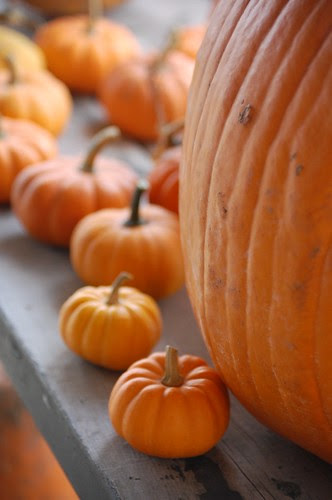lets make some pumpkin pie