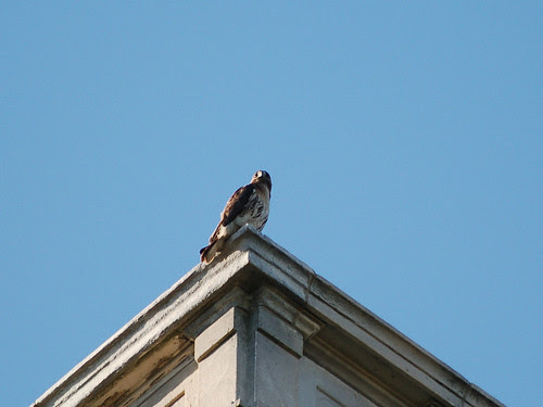 Isolde atop St. Luke's