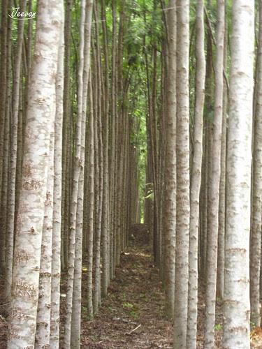 narrow grove