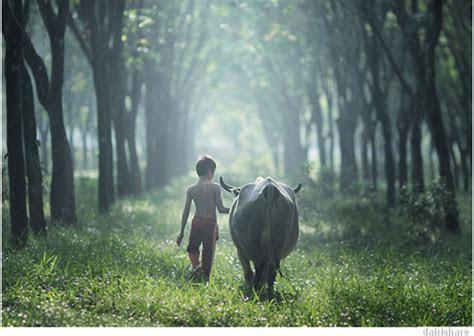gambar kanak kanak  pengembala kerbau