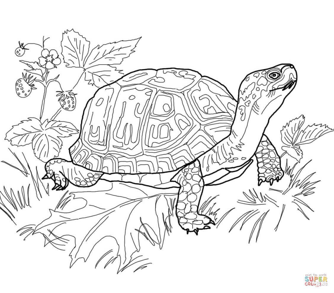 Coloriage de tortue  colorier
