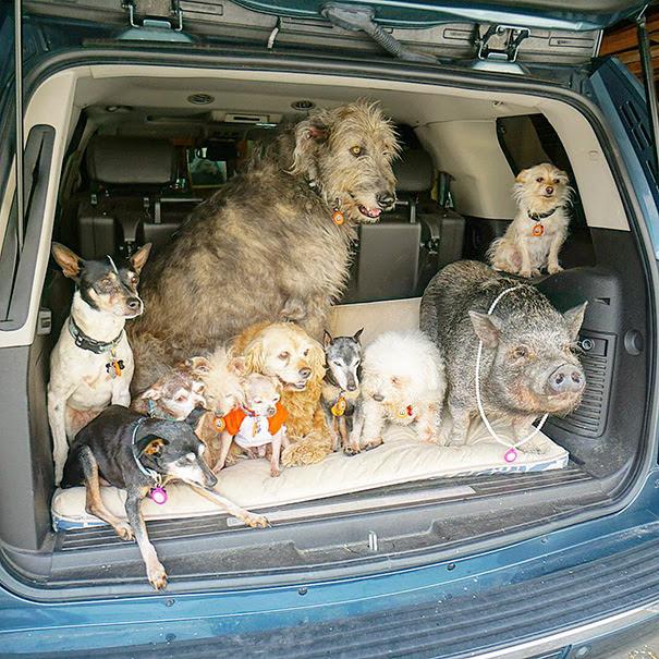 6. Теперь у Грейга живет 10 собак из приюта.