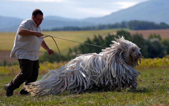 Fotos de cachorros 23