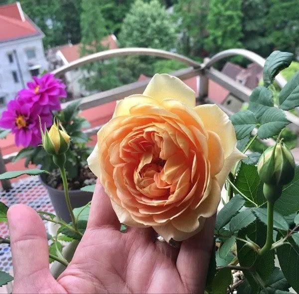 八月種什麼花這8種花八月栽下扔進土裡就能活四季有花賞 Ifuun