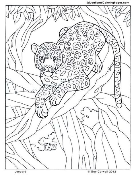 leopard jungle colouring pages page  coloring pages
