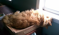 Jasper sleeping on his box