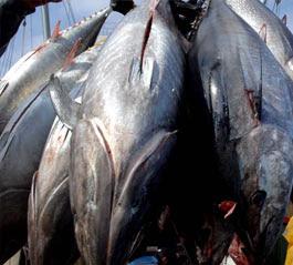 Australian fishing sector looking at a big year
