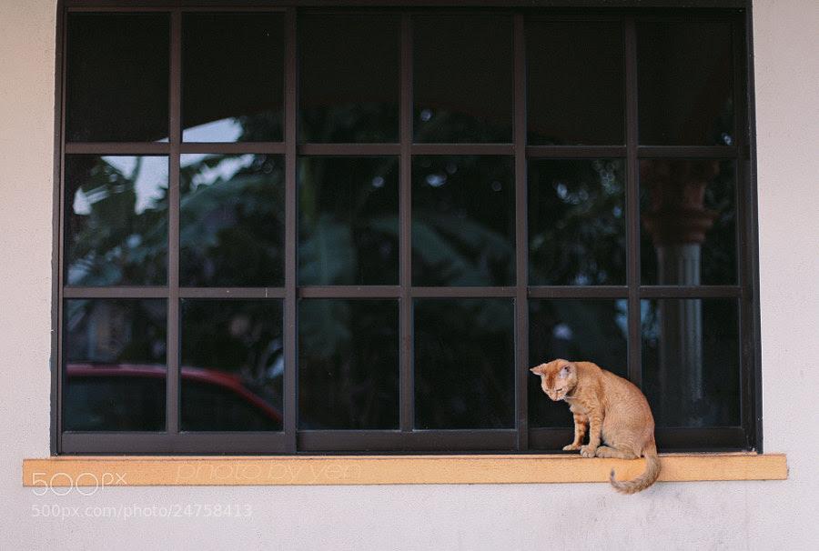 window kitten by Nazrin Shah (NazrinShah)) on 500px.com
