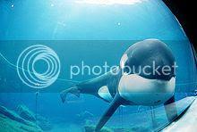 Top Ten Aquariums