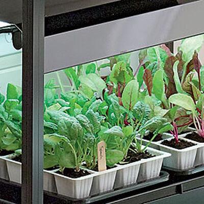 Gardening Under Grow Lights  Gardeners Supply