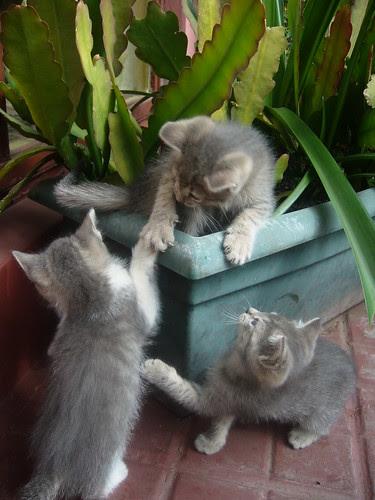 Los Gatos de Francisco 16