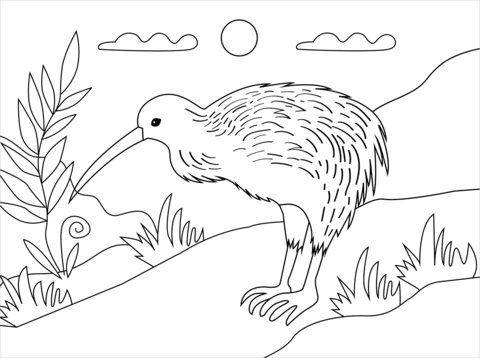 kiwi bird coloring page  free printable coloring pages