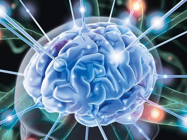 Живой суперкомпьютер. Зачем мозгу вода и почему он активнее ночью?
