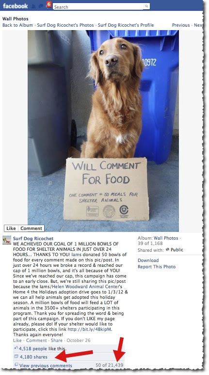 Surf Dog Ricochet and Iams Pet Food - Facebook Post