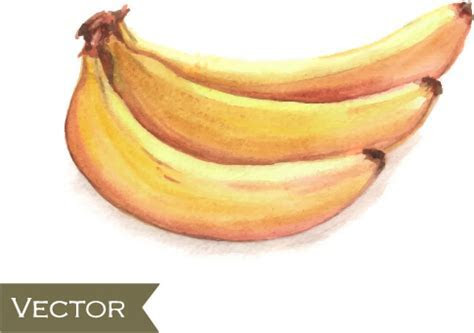 Banana free vector download (245 Free vector) for
