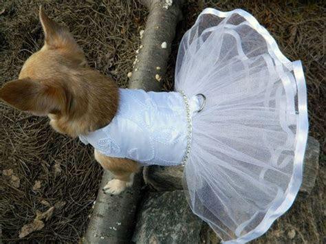 Best 25  Dog wedding dress ideas on Pinterest   Dog
