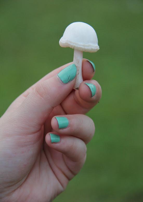 blog lovelymissmegs megan mushroom