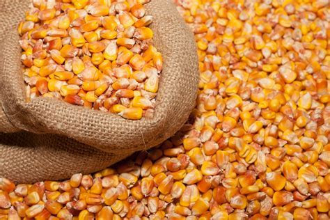 Corn 4k Ultra HD Wallpaper and Background Image