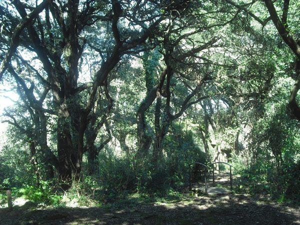 Tal y como se puede apreciar por el pequeño puenta, el Bosc de les Estunes ofrece una serie de recorridos seguros a través del bosque aptos para toda la familia