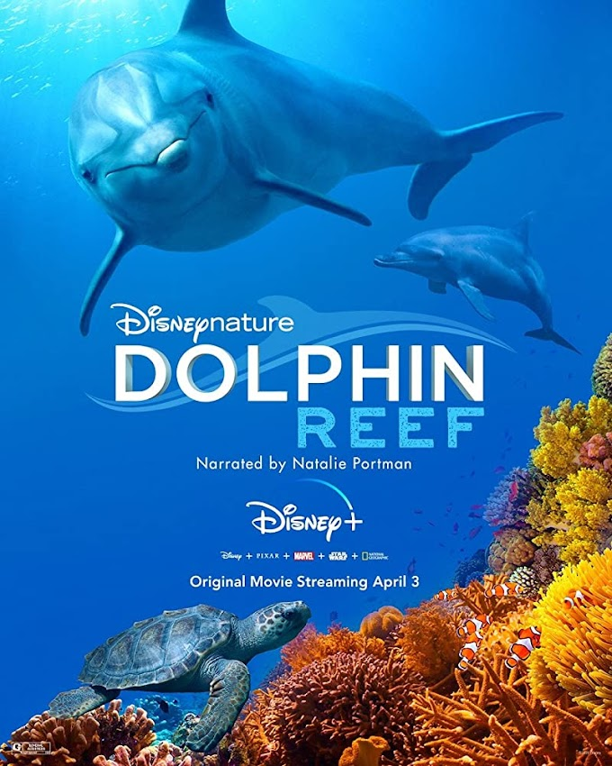 Dolphin Reef 2020