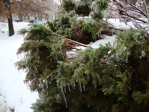 Groundhog day ice storm 2/2/11