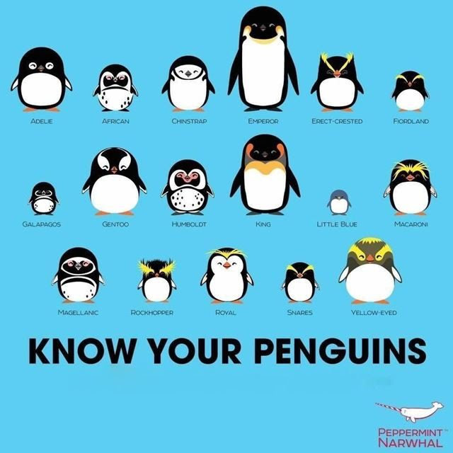 ペンギンの種類一覧をかわいいイラスト画像で紹介世界ペンギンの日