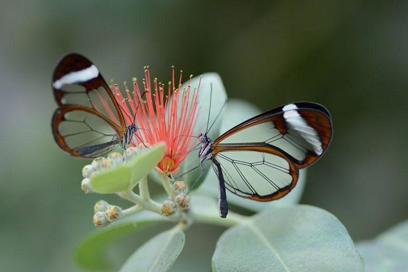 transformacao borboletas 9-