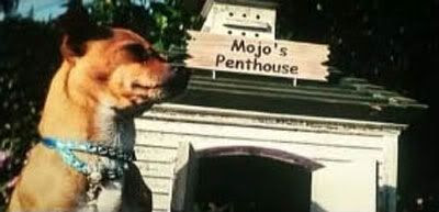 Mojo is looking for another dog to dominate.