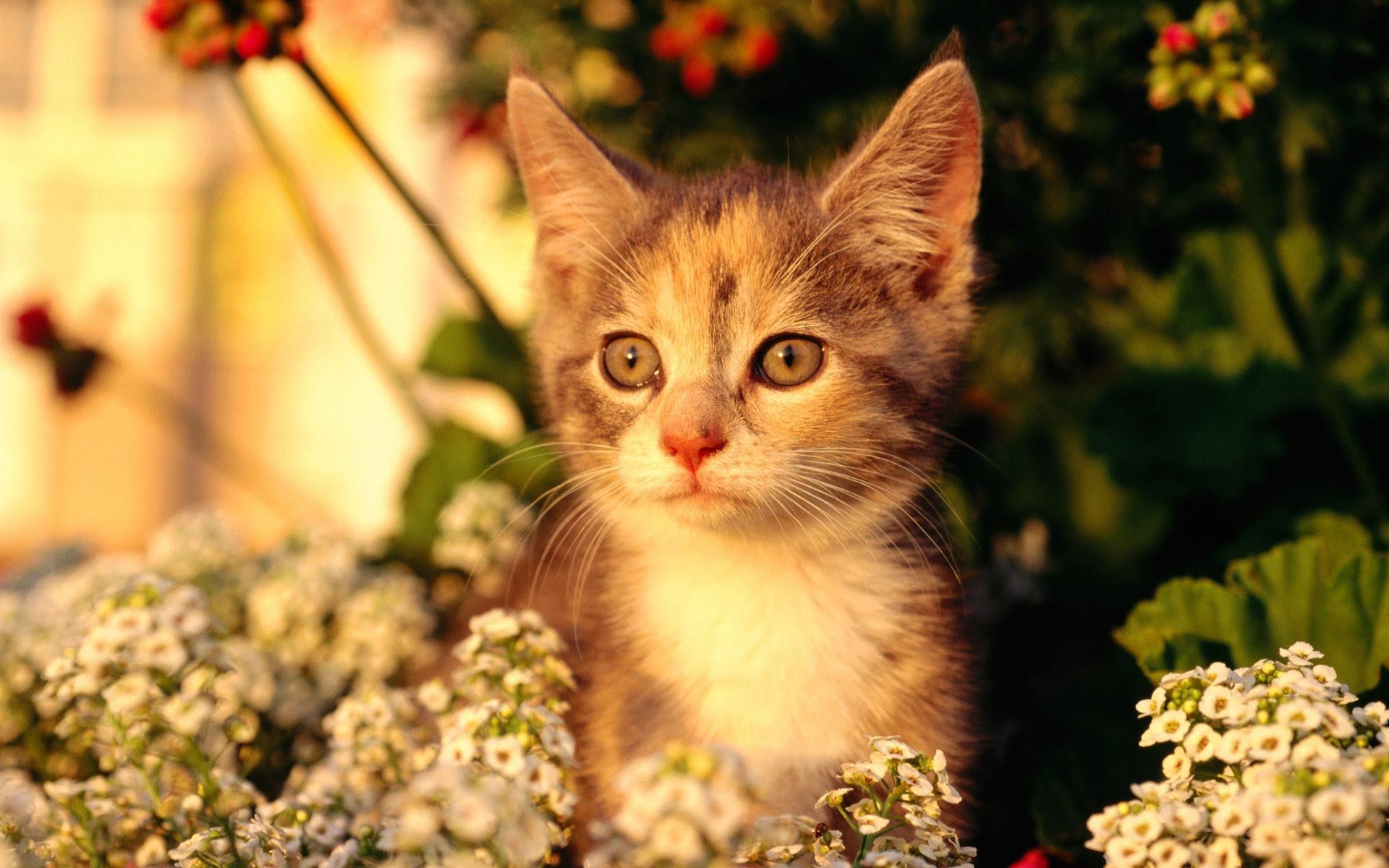 Hdの壁紙かわいい猫の写真 21 1920x1200 壁紙ダウンロード Hdの