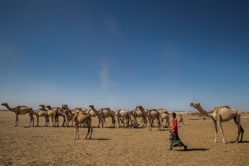 Nómadas en Etiopia con sus camellos.