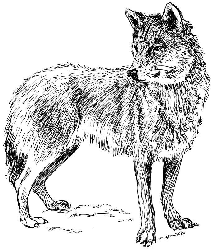 Wolf Coloring Pages 2 | Coloring Pages To Print