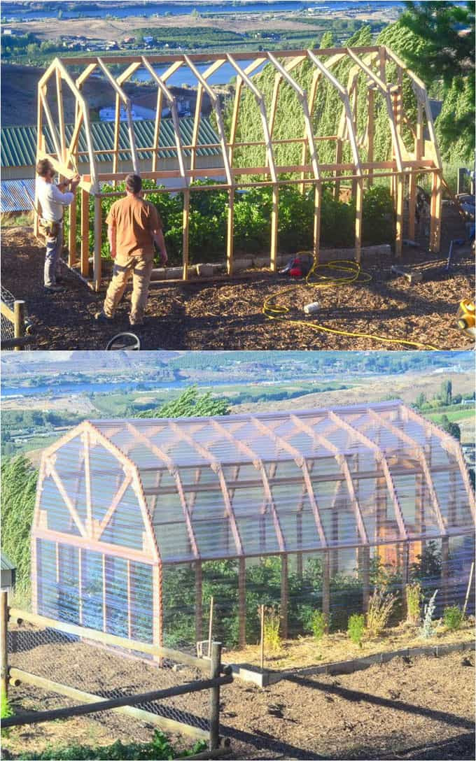 large DIY greenhouse with clear acrylic polycarbonate sheet panels