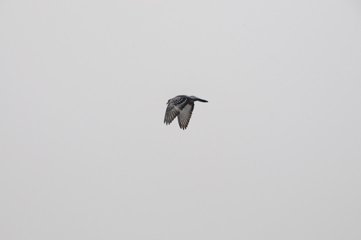 birds of the acme parking lot_1195 web