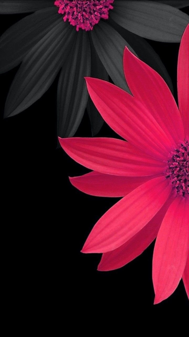 おしゃれなピンク色の花 めちゃ人気 Iphone壁紙dj