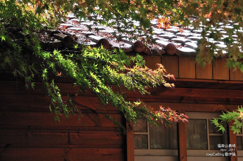 2011_1106福壽山農場DSC_3275