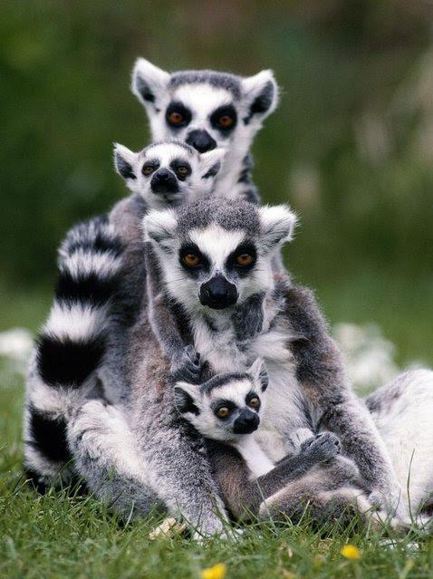 perierga.gr - Άγρια ζώα φωτογραφίζονται με τα μωρά τους!