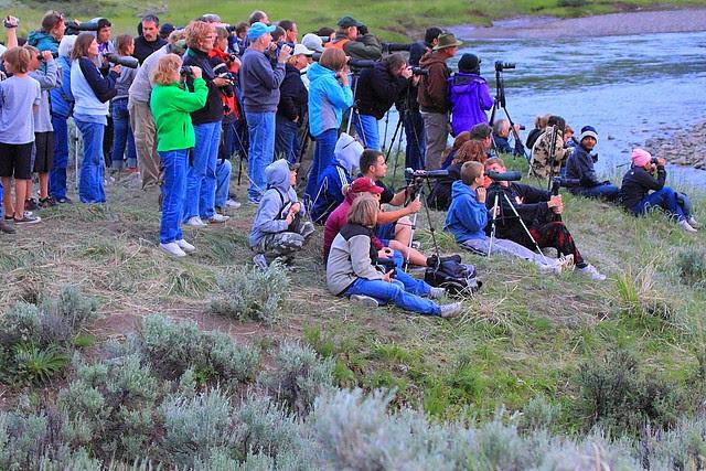 IMG_3227 Bear Rush, Yellowstone National Park