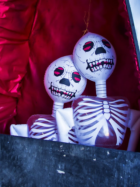 Halloween skeletons in a coffin