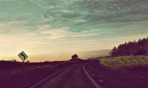 road sunshine vintage sky tree