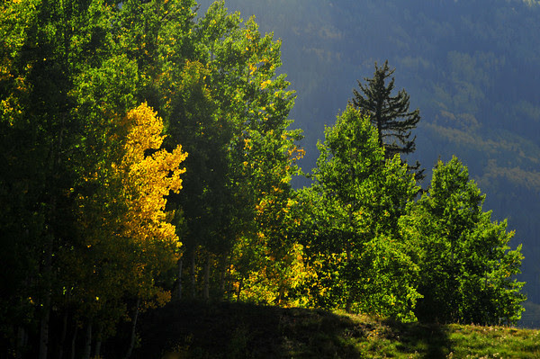 Peekaboo Color on Molas Pass