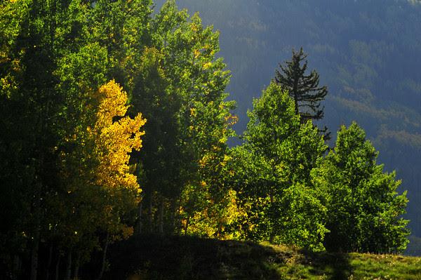 Peekaboo Color on Molas Pass