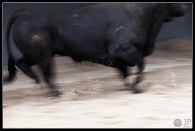03-13-Novillo-La-Dehesilla-4