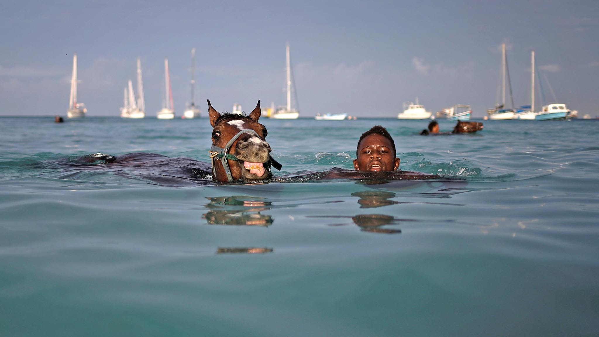 A handler swims with a horse from the Garrison Savannah in the Caribbean Sea near Bridgetown, Barbados