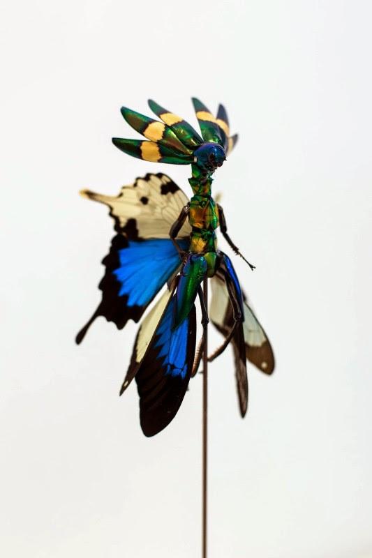 fee insecte graine morceau assemblage 01 533x800 Les fées de Cedric Laquieze