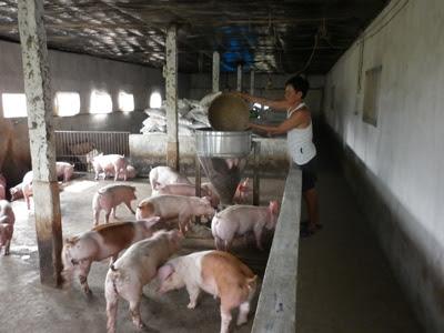 Ngành thức ăn chăn nuôi sẽ gặp khó.