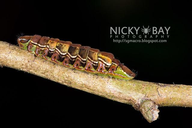 Caterpillar - DSC_9465