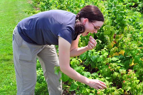 Raspberry Pick...Eating