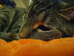 Maggie sleeping on the Orange B