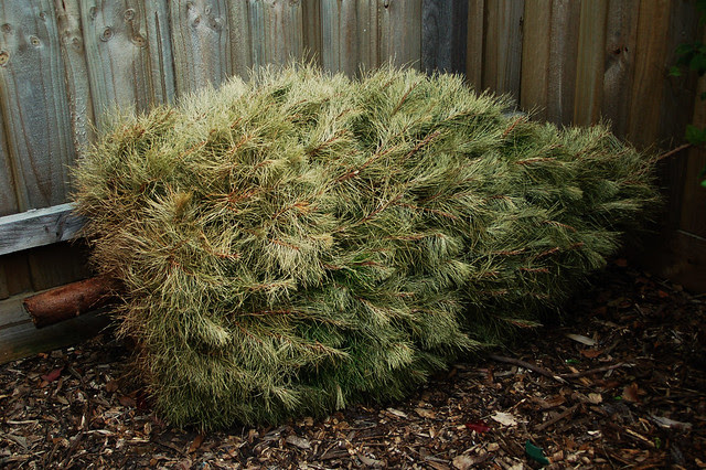 Side By Side Week 119 - Where Christmas trees go to die