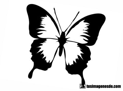 Imágenes De Dibujos De Mariposas Imágenes